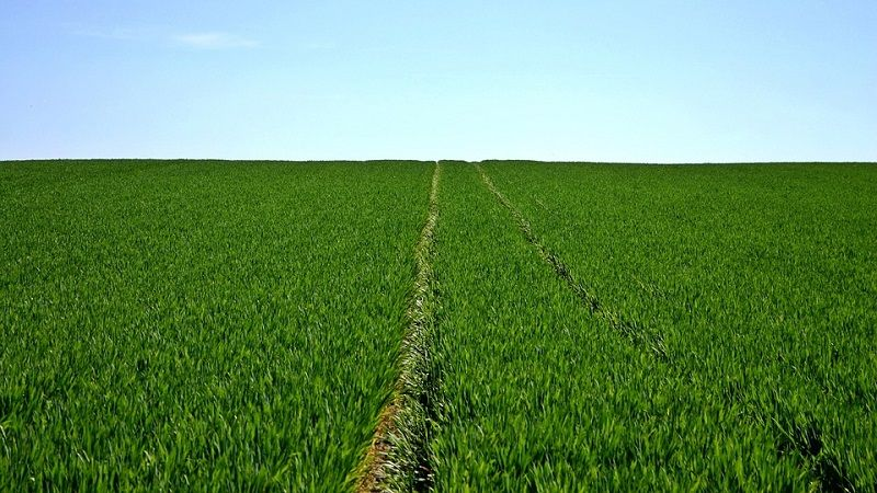 campi agricoli