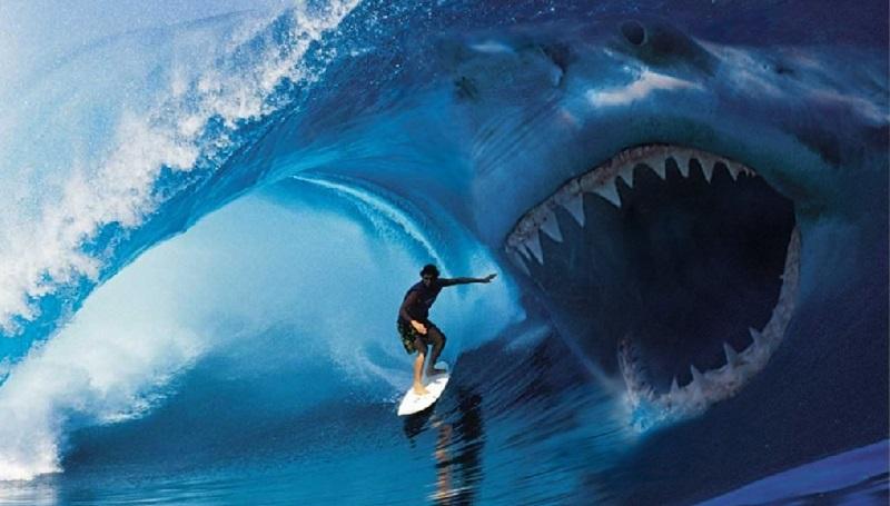 turista divorato da uno squalo