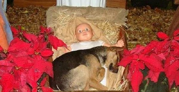 Cane nel presepe