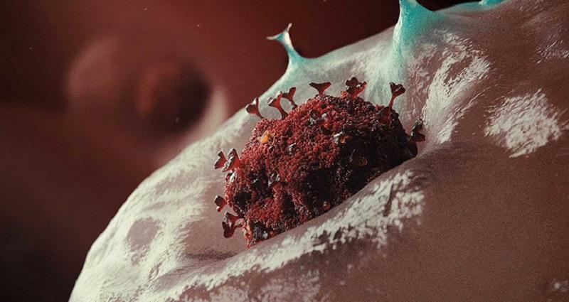coronavirus lamezia