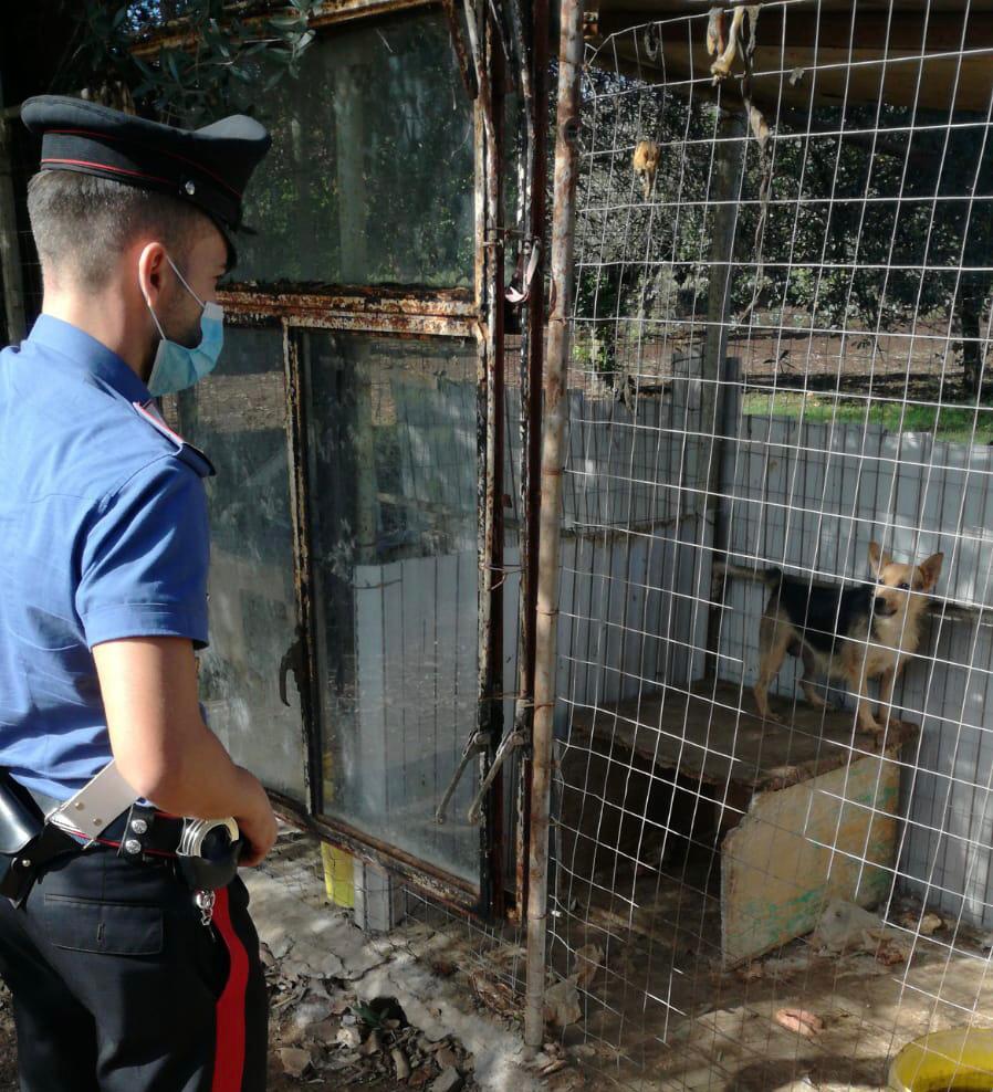Canile lager sequestrato nel Vibonese: 28 cani malnutriti tra gli escrementi