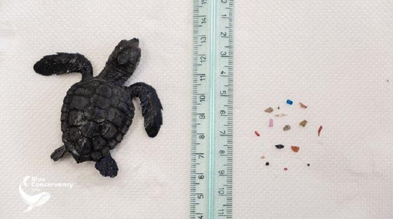 tartaruga reggio
